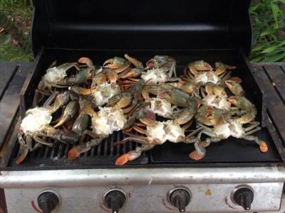 Darwin fishing and crabbing